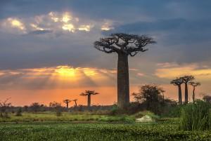 מדגסקר