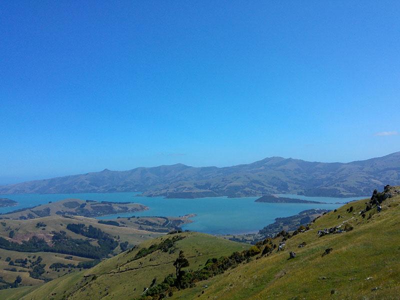 800_NZ_Nitzan_9